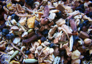 oak king's remedy tisane